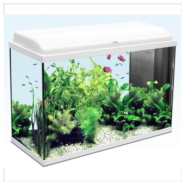 Table basse aquarium animalis